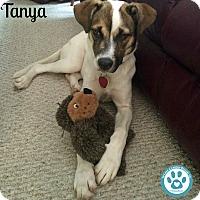 Adopt A Pet :: Tanya - Kimberton, PA