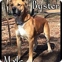 Adopt A Pet :: Buster (reduced fee!) - Windham, NH