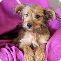 Adopt A Pet :: Lucky - Chester Springs, PA