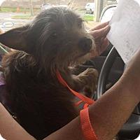 Adopt A Pet :: Finn - Manassas, VA