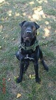 Shar Pei Mix Dog for adoption in Southampton, New York - OTIS