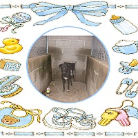 Adopt A Pet :: BEETLE - KELLYVILLE, OK