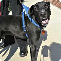 Adopt A Pet :: Bunky - McKinney, TX