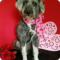 Adopt A Pet :: Becca - Portland, OR