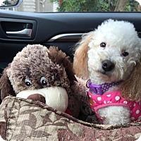 Adopt A Pet :: Monique Williams - Fresno, CA