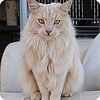 Adopt A Pet :: Ranger - Palmdale, CA
