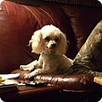 Adopt A Pet :: Arnold - Crystal River, FL