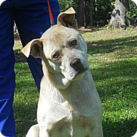 Adopt A Pet :: Rocky - Conyers, GA