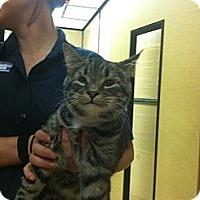Adopt A Pet :: Zeke - Monroe, GA