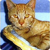 Adopt A Pet :: Blazer - Medway, MA