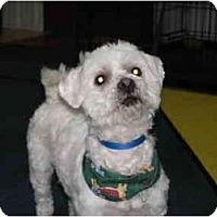 Adopt A Pet :: Dudley - Rigaud, QC
