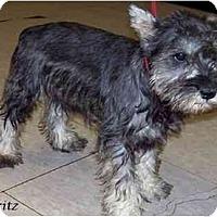 Adopt A Pet :: Fritz - Dayton, OH