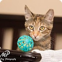 Adopt A Pet :: Neo - Fountain Hills, AZ