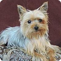 Adopt A Pet :: Baby - Yakima, WA