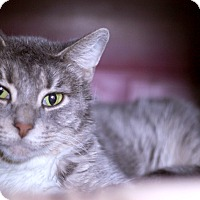 Adopt A Pet :: Evelyn - Chicago, IL