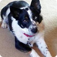 Adopt A Pet :: Galen - Bellevue, NE