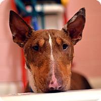 Adopt A Pet :: Pinky - Garland, TX