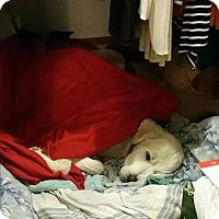 Adopt A Pet :: Sonny Boy - Kyle, TX