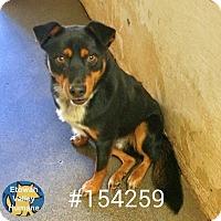 Adopt A Pet :: Dane - Boston, MA