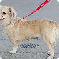 Adopt A Pet :: Isabel - Encino, CA