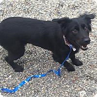 Adopt A Pet :: Tia - Oak Ridge, NJ