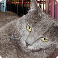 Adopt A Pet :: Gigi - Walnut Creek, CA
