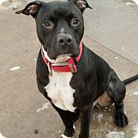 Adopt A Pet :: Buck FOSTERED (Karen A) - Troy, IL
