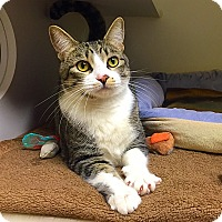 Adopt A Pet :: Oscar - Mission Viejo, CA