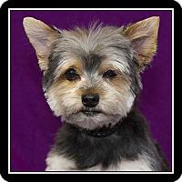 Adopt A Pet :: Mikey - San Dimas, CA