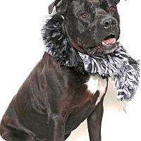 Adopt A Pet :: JESSE - Gloucester, VA