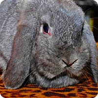 Adopt A Pet :: BONNIE - Louisville, KY