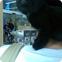 Adopt A Pet :: Egypt - Ogden, UT