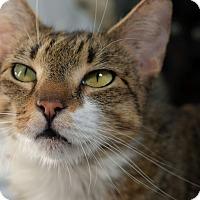 Adopt A Pet :: Francesca - Brooklyn, NY