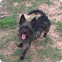 Adopt A Pet :: TINA - Houston, TX