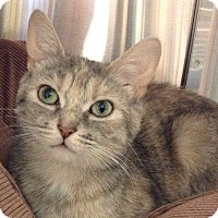 Adopt A Pet :: Iris - Toronto, ON