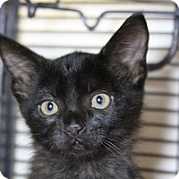 Adopt A Pet :: Kenya - Sarasota, FL