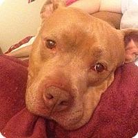Adopt A Pet :: Quinn - Worcester, MA