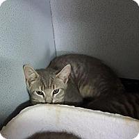 Adopt A Pet :: Aladdin - Mount Sterling, KY
