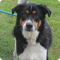 Adopt A Pet :: Brody (Needs Foster) - Washington, DC