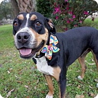 Adopt A Pet :: Mary - Green Cove Springs, FL