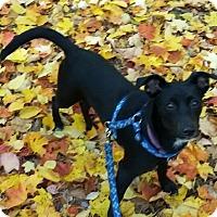 Adopt A Pet :: Libby - Manchester, NH