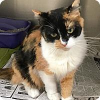 Adopt A Pet :: Sarah - North Wilkesboro, NC
