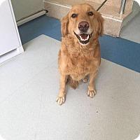 Adopt A Pet :: Fiona - Washington, DC
