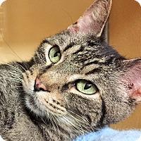 Adopt A Pet :: Tomato *Petsmart GB* - Appleton, WI