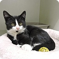 Adopt A Pet :: Christopher - Massapequa, NY
