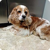 Adopt A Pet :: Connor - Nicholasville, KY
