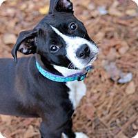 Adopt A Pet :: Selena - Gainesville, FL