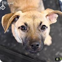 Adopt A Pet :: Sophia - St Paul, MN