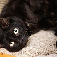 Adopt A Pet :: Cole - Fairfax Station, VA