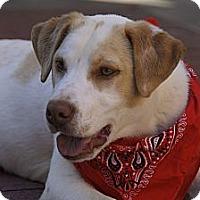 Adopt A Pet :: Bryant - Burlington, VT